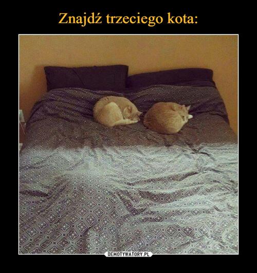 Znajdź trzeciego kota: